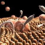 Intestinal Parasites